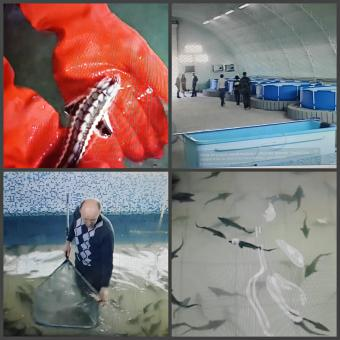 Aquaculture (RAS) project located in Kazakhstan