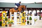 Equilibrium Horses